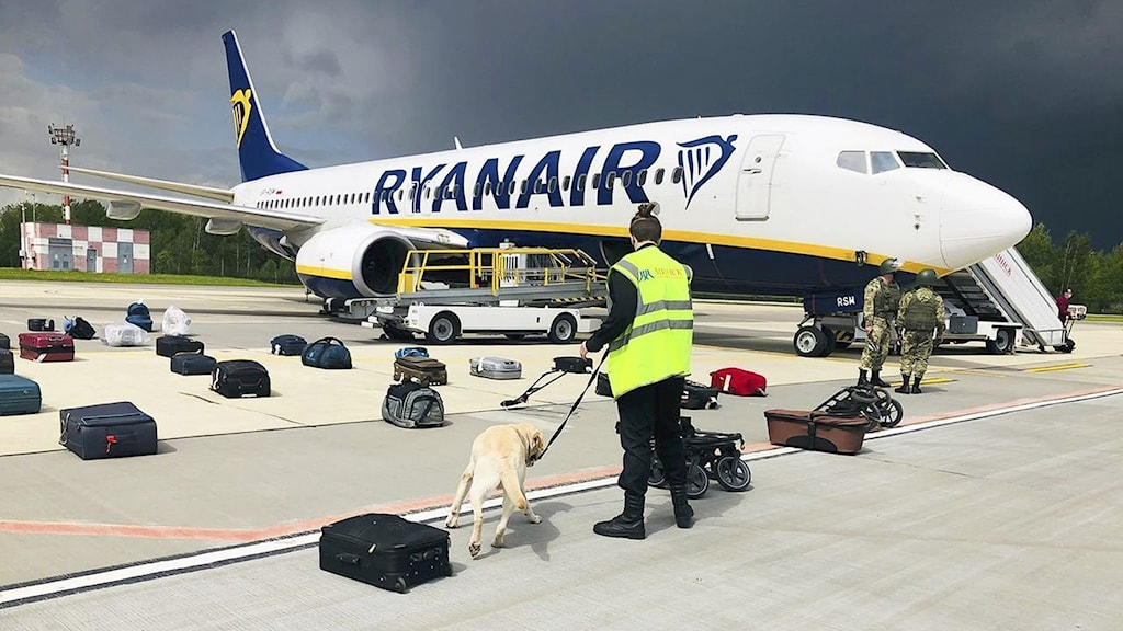A Ryanair passenger plane on the runway with a sniffer dog searching luggage.