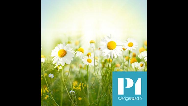 Sommar i P1