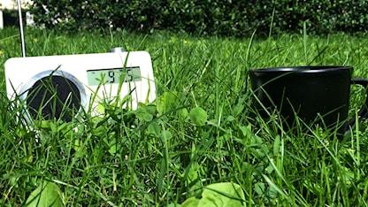 En radio och kaffe i gräset. Foto: Stina Ericsson/Sveriges Radio.