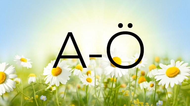 A-Ö 2