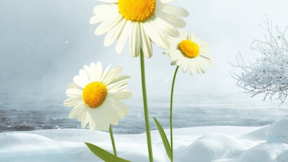 Programbild för Sommar & Vinter i P1