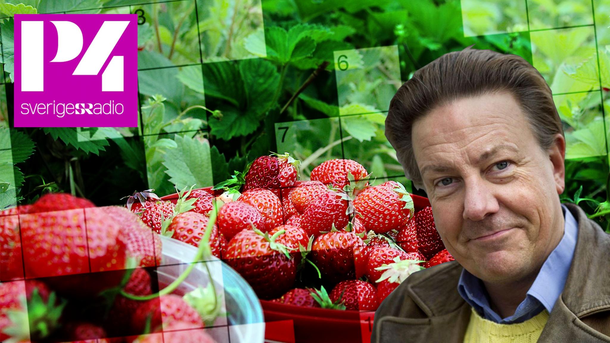 Anders Eldeman och jordgubbar.