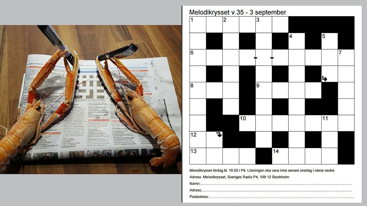 Melodikrysset vecka 35 - 3 september. Bilden är tagen av Sture Hellqvist administratör av Facebook gruppen Kryssarklubben Melodikryssarna.