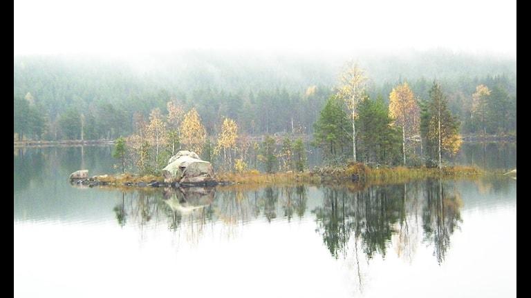 Фото: Johan Bryggare/Flickr