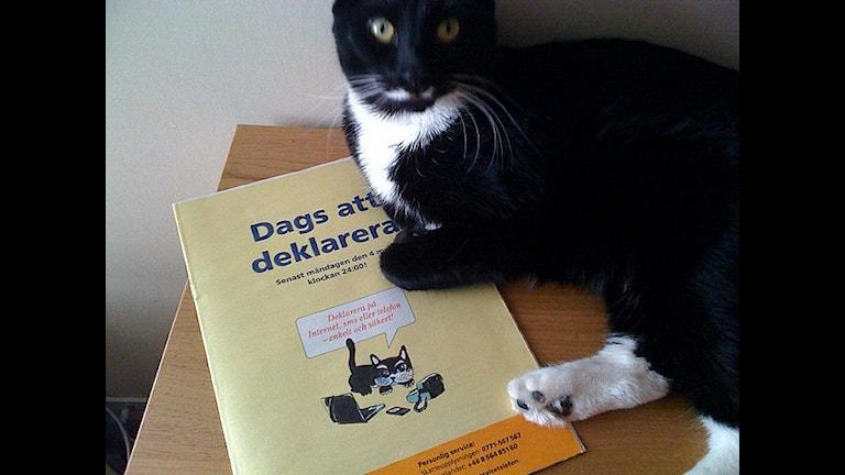"""Nicht für die Katz. Mit der Broschüre """"Es wird Zeit zur Abgabe der Erklärung"""" bekamen die Steuerpflichtigen bereits vor Wochen wichtige Tipps. (Foto: Peter Linden)"""