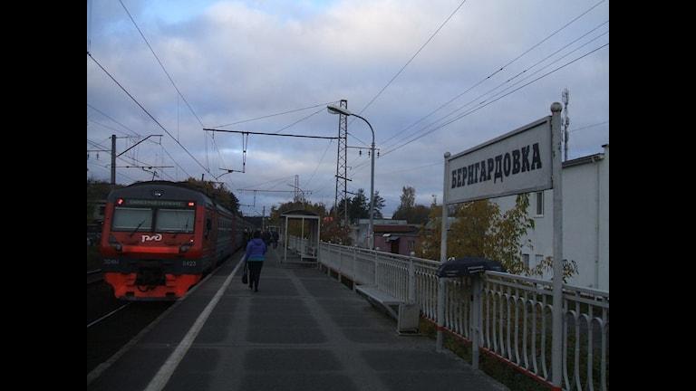 Радио Швеция в Бернгардовке Фото: Людмила Дементьева