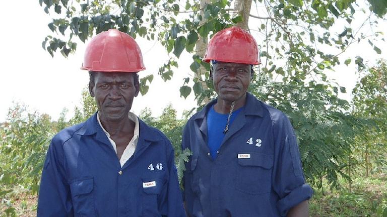 Охранники голландской компании Green resourses AS, в регионе Качунга, на месте посадки шведского климатического леса. Фото: Green resoursces/Flickr