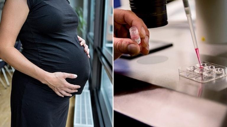 Многие женщины в Швеции стоят в очереди на получение донорской яйцеклетки, чтобы забеременеть. Фото: ТТ