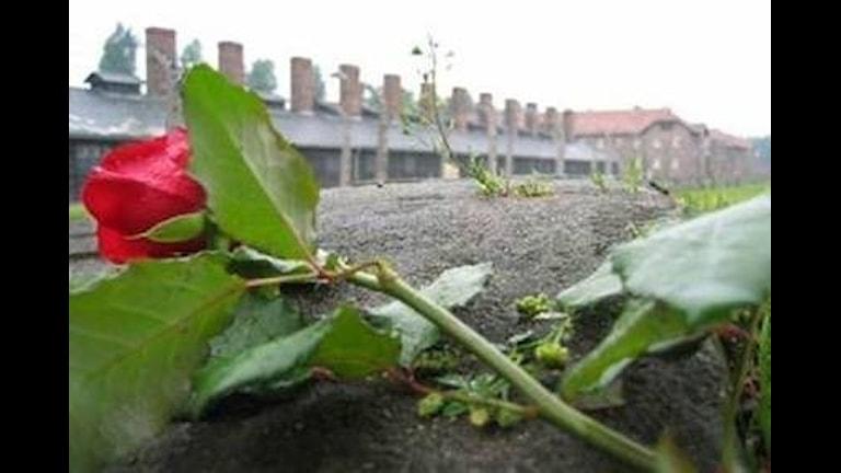 В Швеции день памяти Холокоста