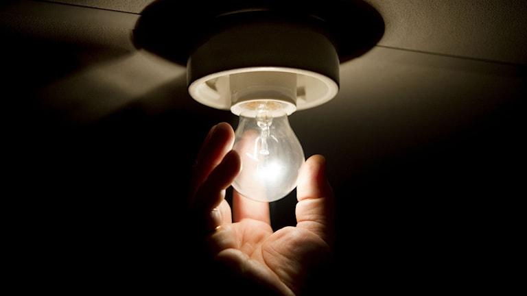 Glühbirne wird eingeschraubt (Foto: Jessica Gow / TT.)