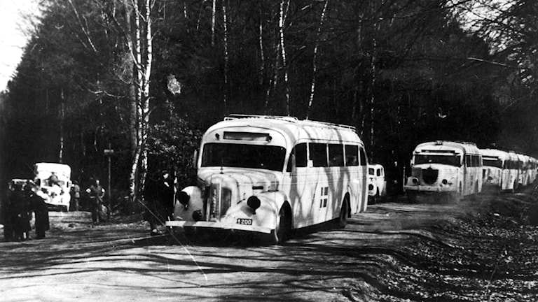 Weiße Busse (Foto: TT)