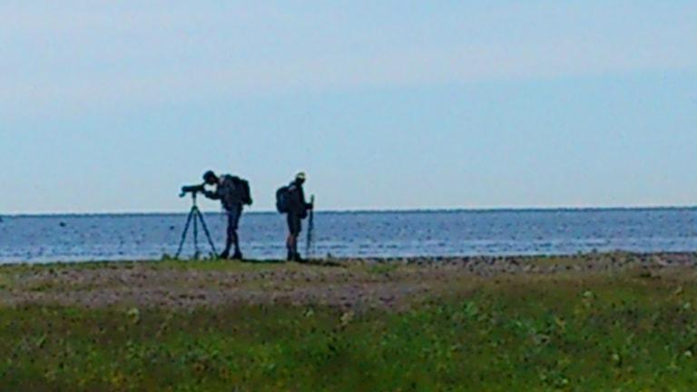 Fågelskådare vid Ölands södra udde.