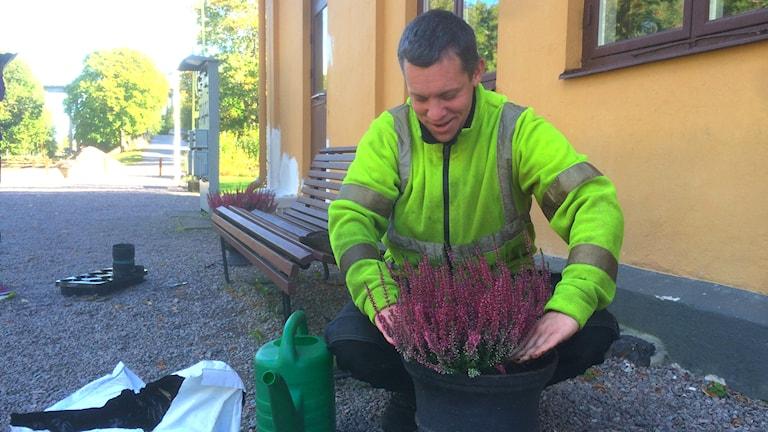Daniel Niklasson in Arbeitskleidung bepflanzt die Blumentöpfe am Museumsbahnhof Verkebäck mit Heide. (Foto: Sybille Nevelig / Radio Schweden)