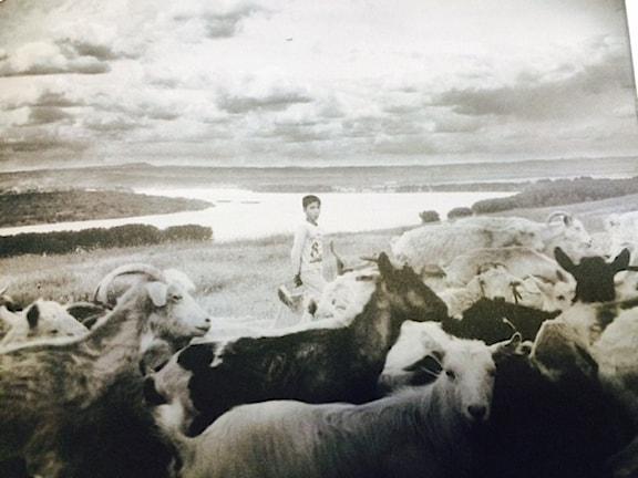 "Foto kotar e kevnja ""Det vi som är dom"" kotar e Maja Kristin Nylander."