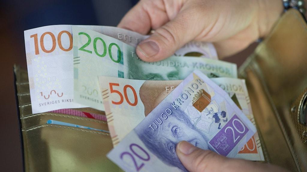 Nya sedlar Foto: Fredrik Sandberg/TT