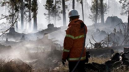 En brandman släcker en skogsbrand. Foto: Johan Nilsson/TT