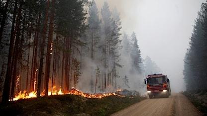 Skogsbrand vid Kårböle strax utanför Ljusdal. Foto: Mats Andersson/TT