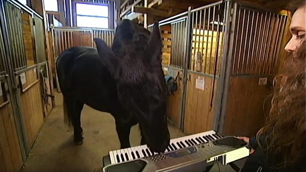 En häst spelar synt.