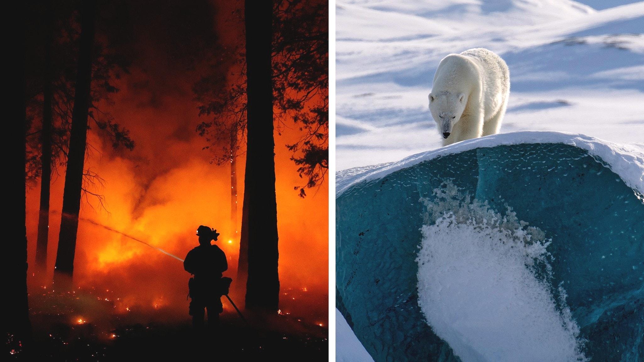 Rättegång om bränder och hur lever man i Arktis?