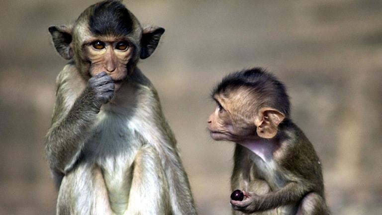Прикольные открытки с обезьянами и со словами, телефон прикольные про