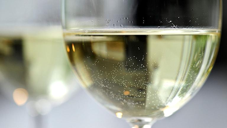 Ett glas med vitt vin. Foto: Anders Wiklund/TT