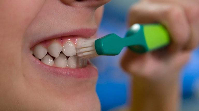 Pojke borstar tänderna. Foto: Claudio Bresciani/TT