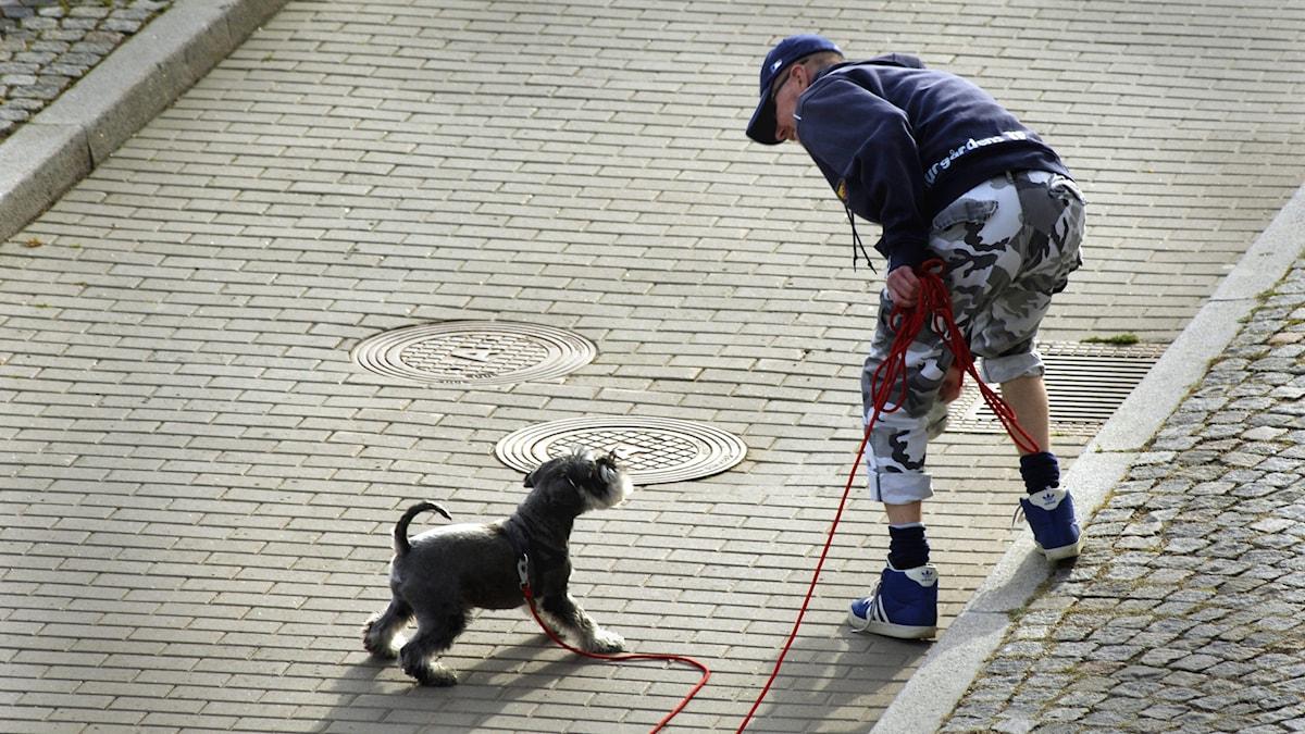 En man pratar med sin hund. Foto: Hasse Holmberg/TT