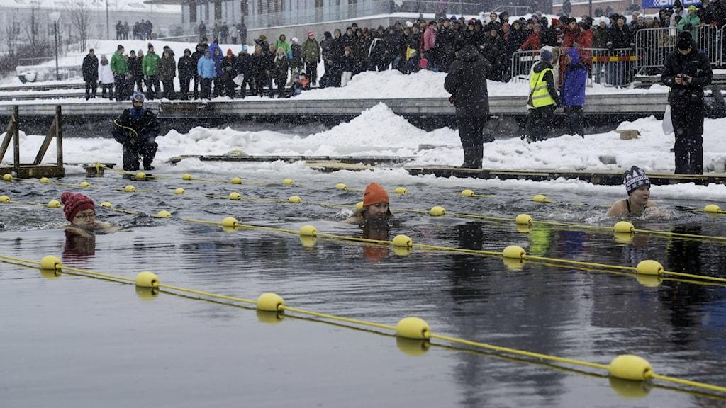 I dag är det Skellefteås världscuptävling i vintersim.