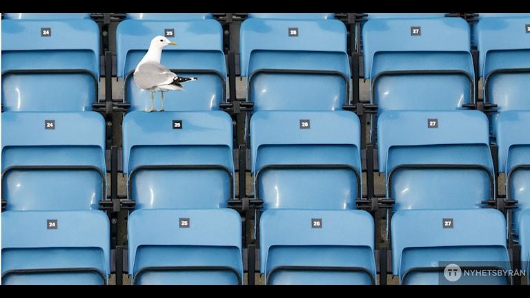 Ska fotbollslagen behöva spela för tomma läktare?