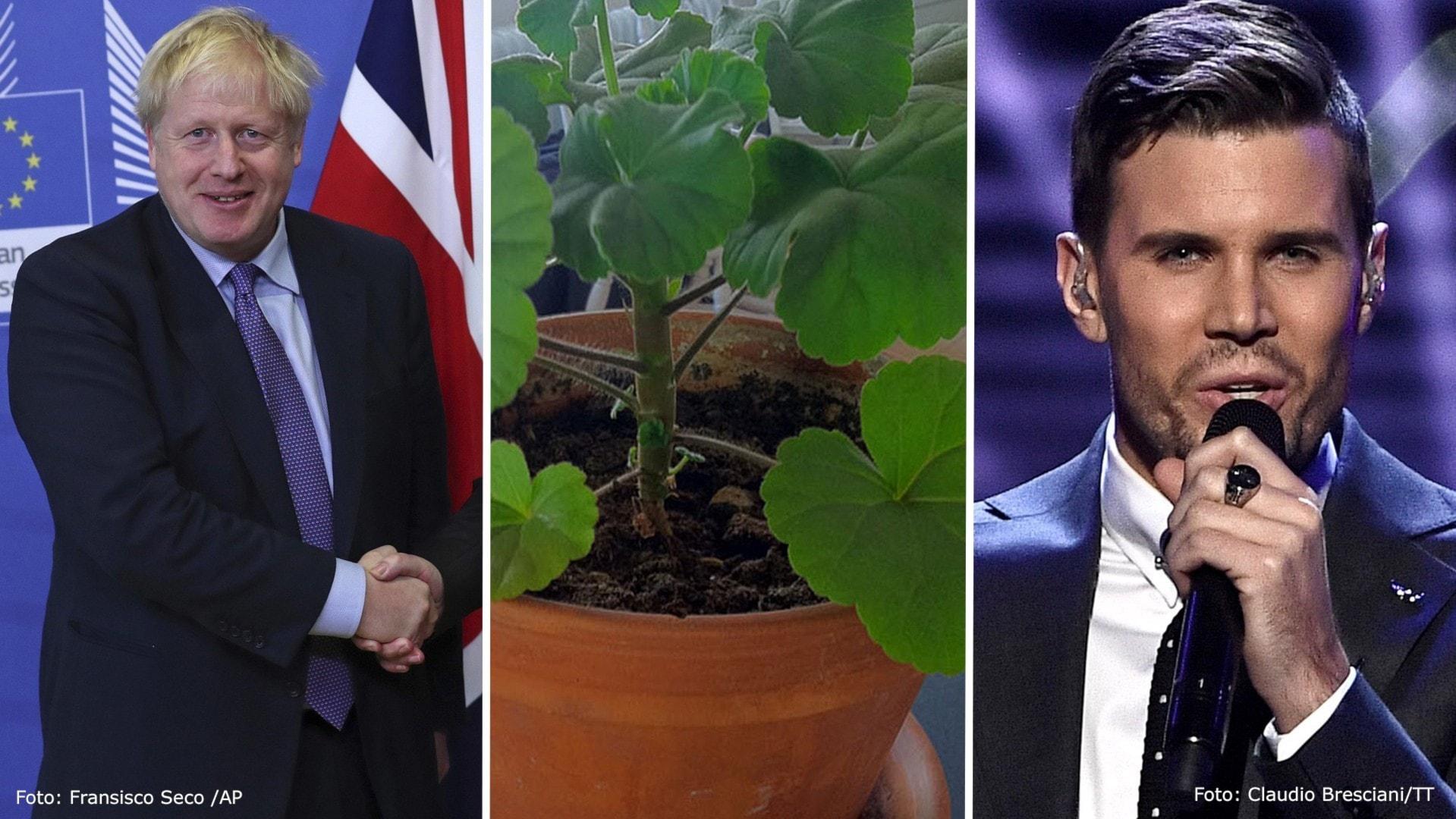 Brexit, blommor och Bengtsson