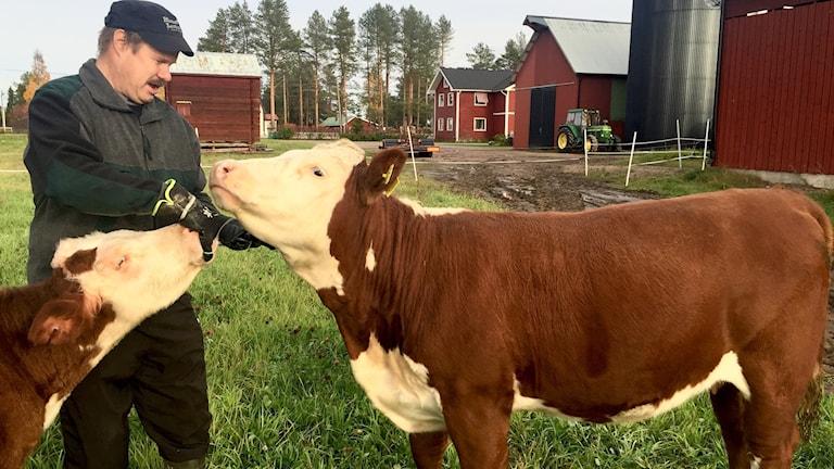 Mikael Mäki skänker ko till Världens Barn.