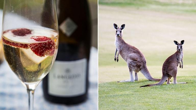 Vin med jordgubbar/ Australien.