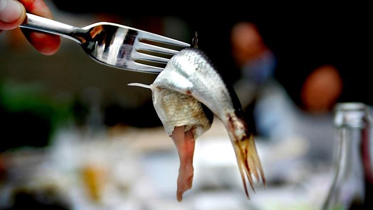 Surströmming på en gaffel