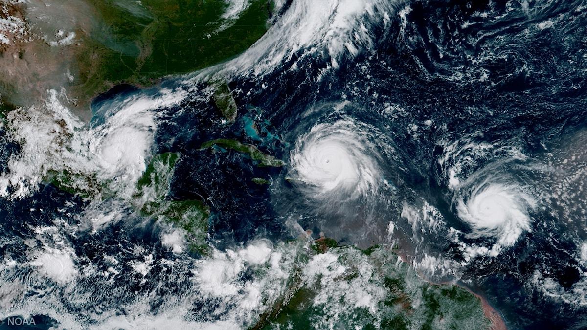 Satellitbild över orkanen Irma som beräknas nå Florida i helgen.