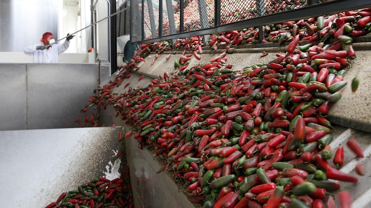 Mängder av färsk chili