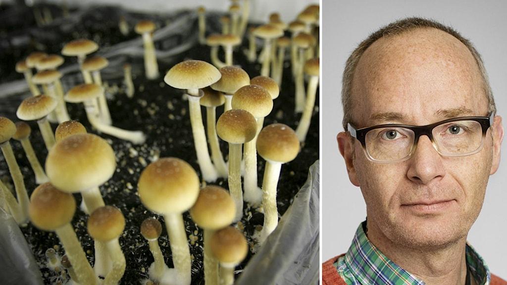 Svampar och forskaren Johan Lundberg