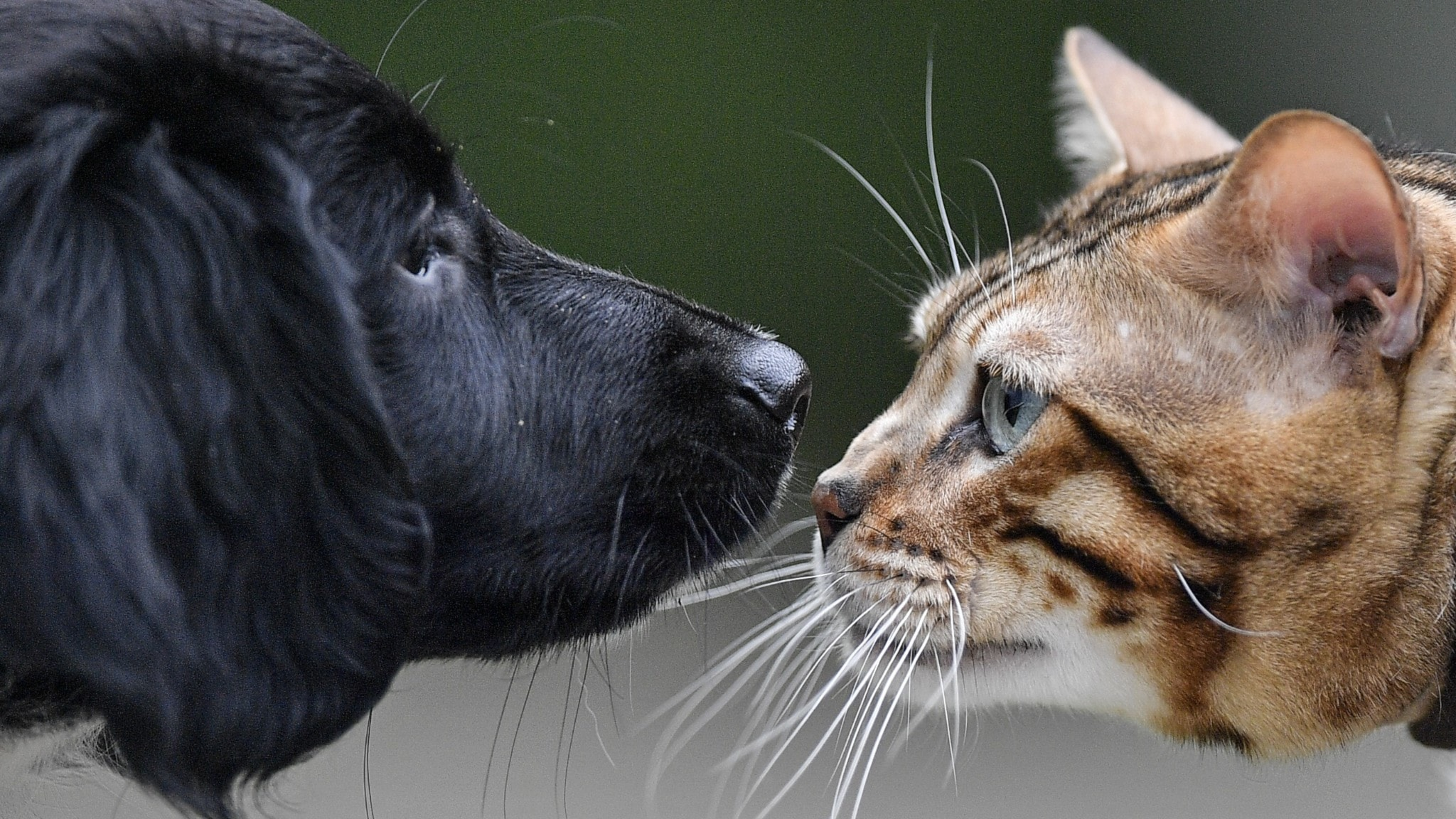 Stigande djurvårdspriser, Greta Thunbergs klimataktion i New York, Alexandra Zazzi tipsar om paprikor