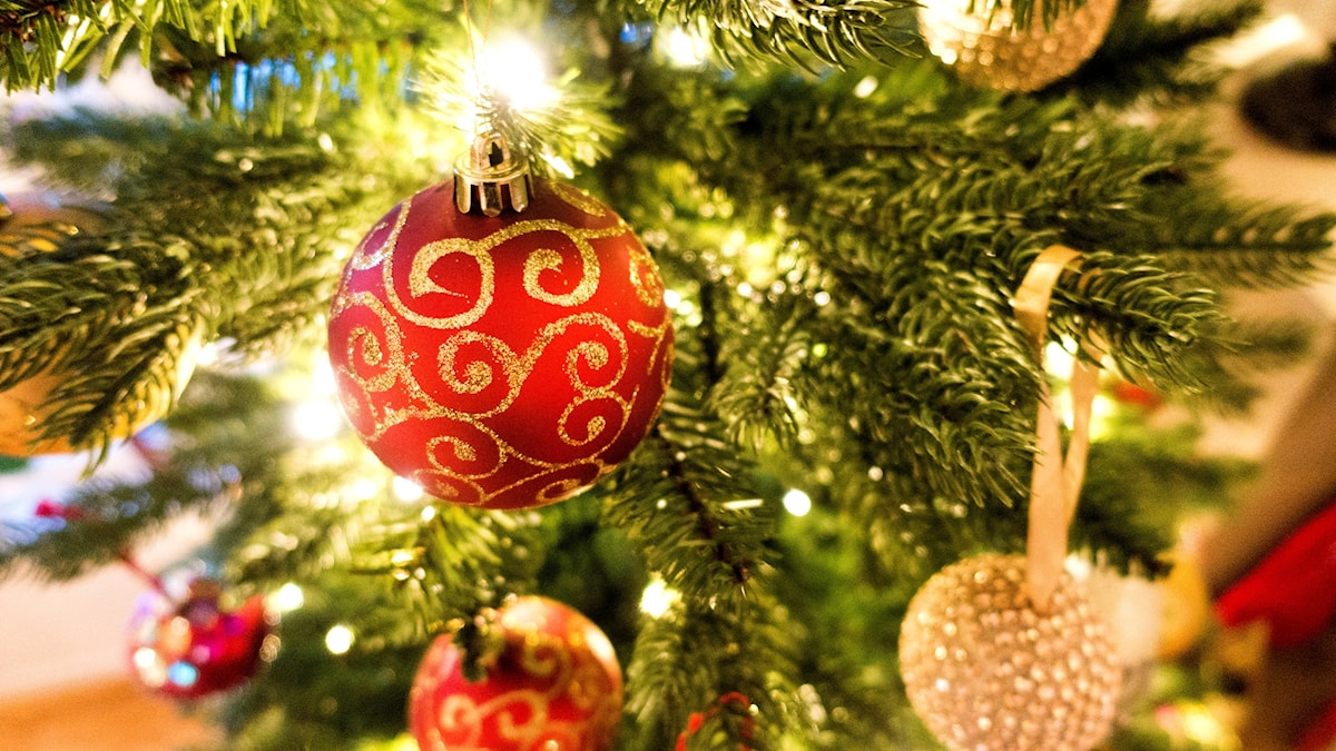 En röd julgranskula hänger i granen.