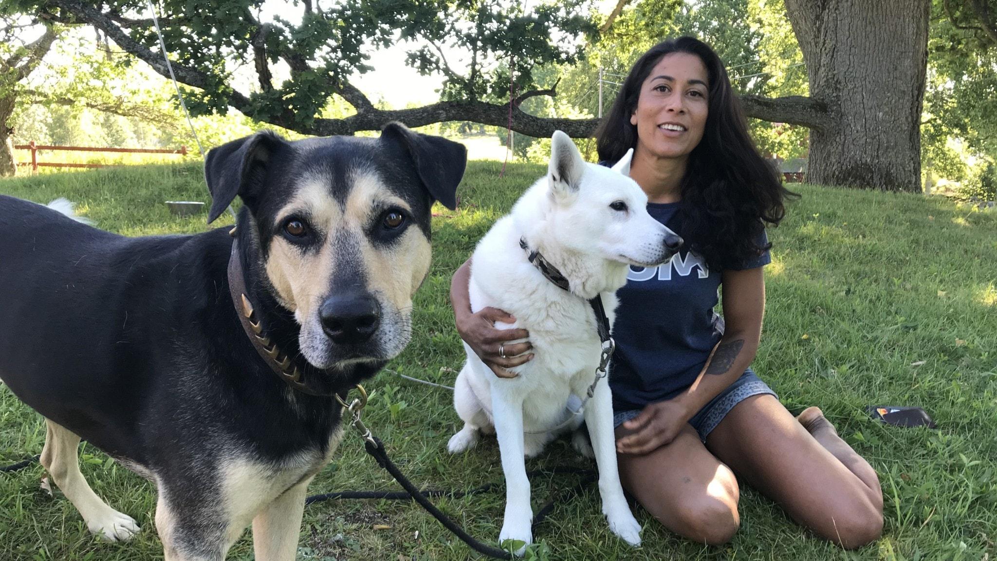 Hundexpert med två hundar i gräset