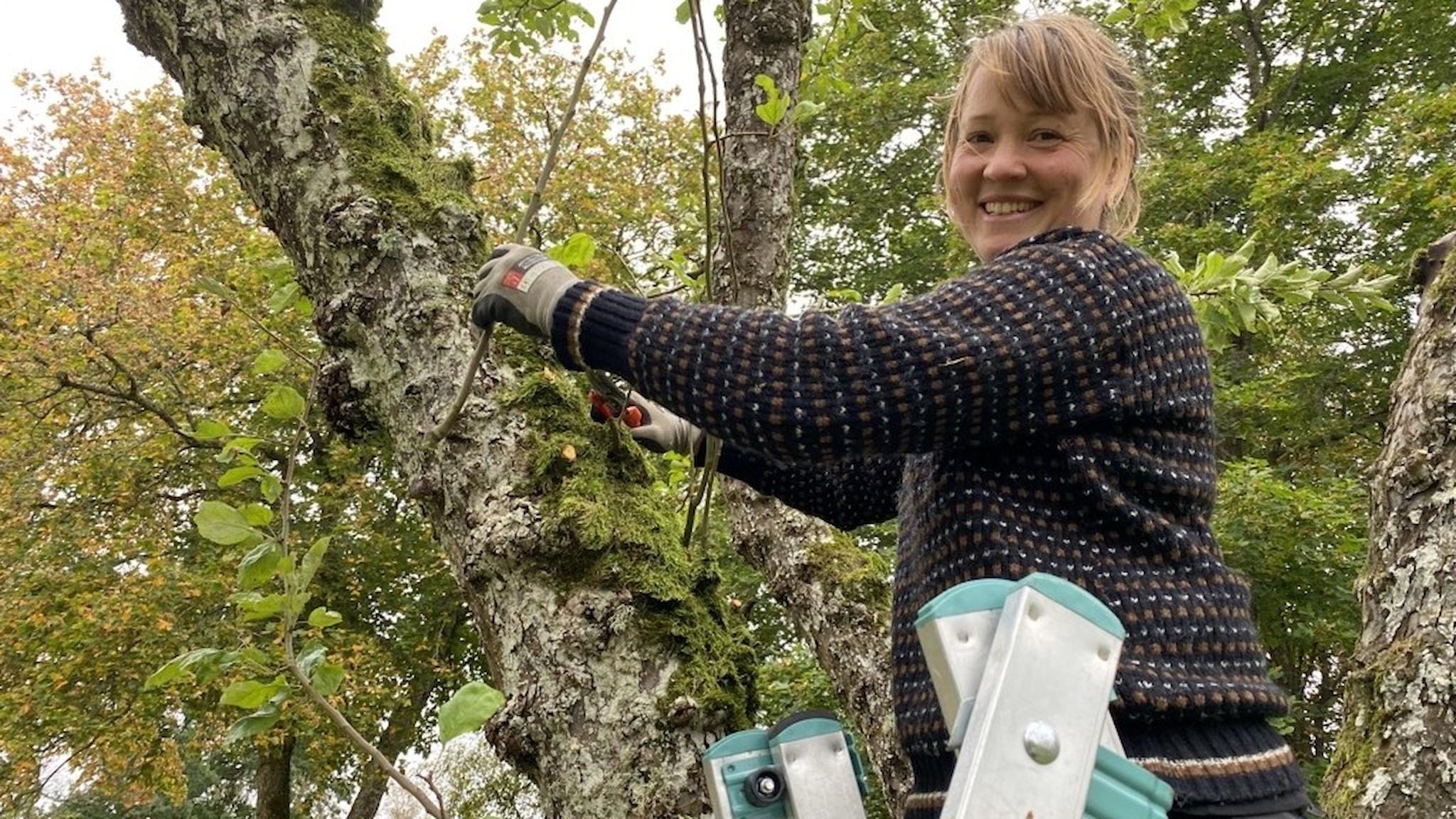Maya Ben-Zur, trädgårdsmästare, beskär ett fruktträd.