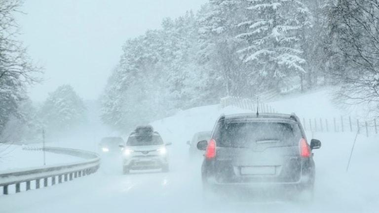 Arkivbild. Snöfall väntas komma över delar av Norrland och Svealand under tisdagseftermiddagen. Foto: Paul Kleiven/TT.