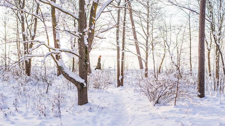 Vintersol  Foto: Ilya Orehov