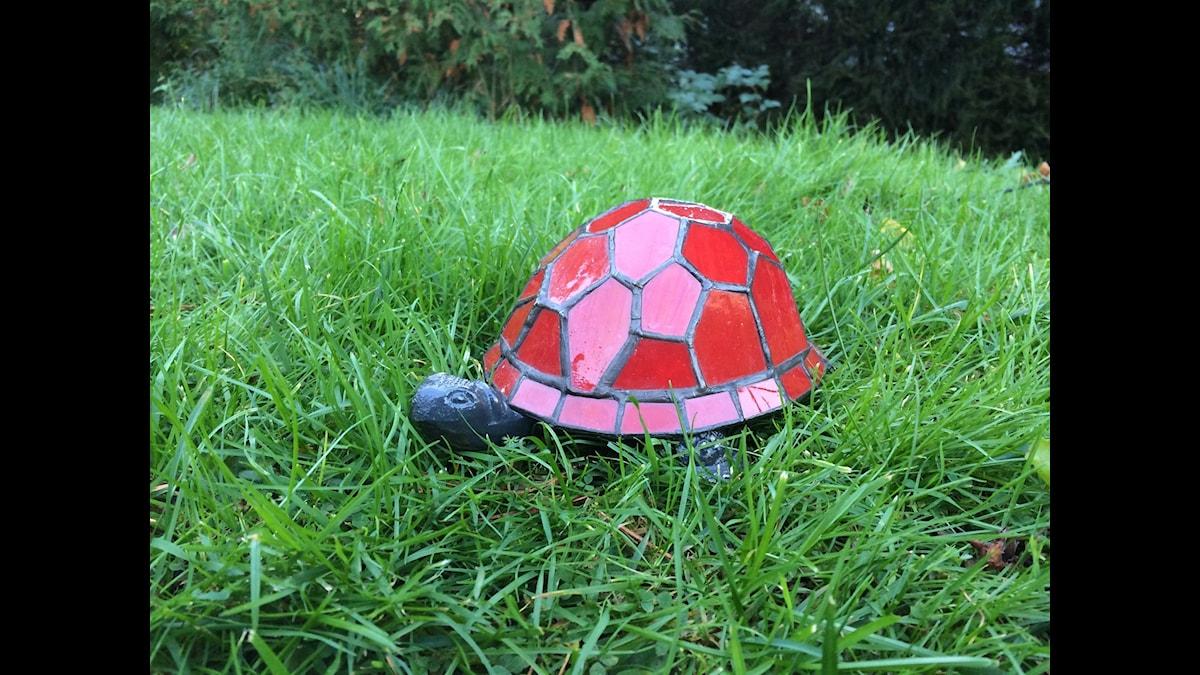 Sköldpadda på rymmen   Foto: Love Alsenius