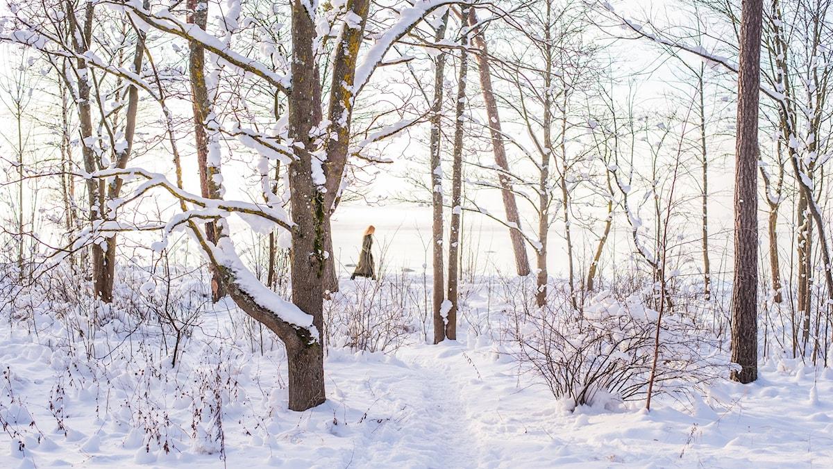 Vinter foto: Ilya Orehov