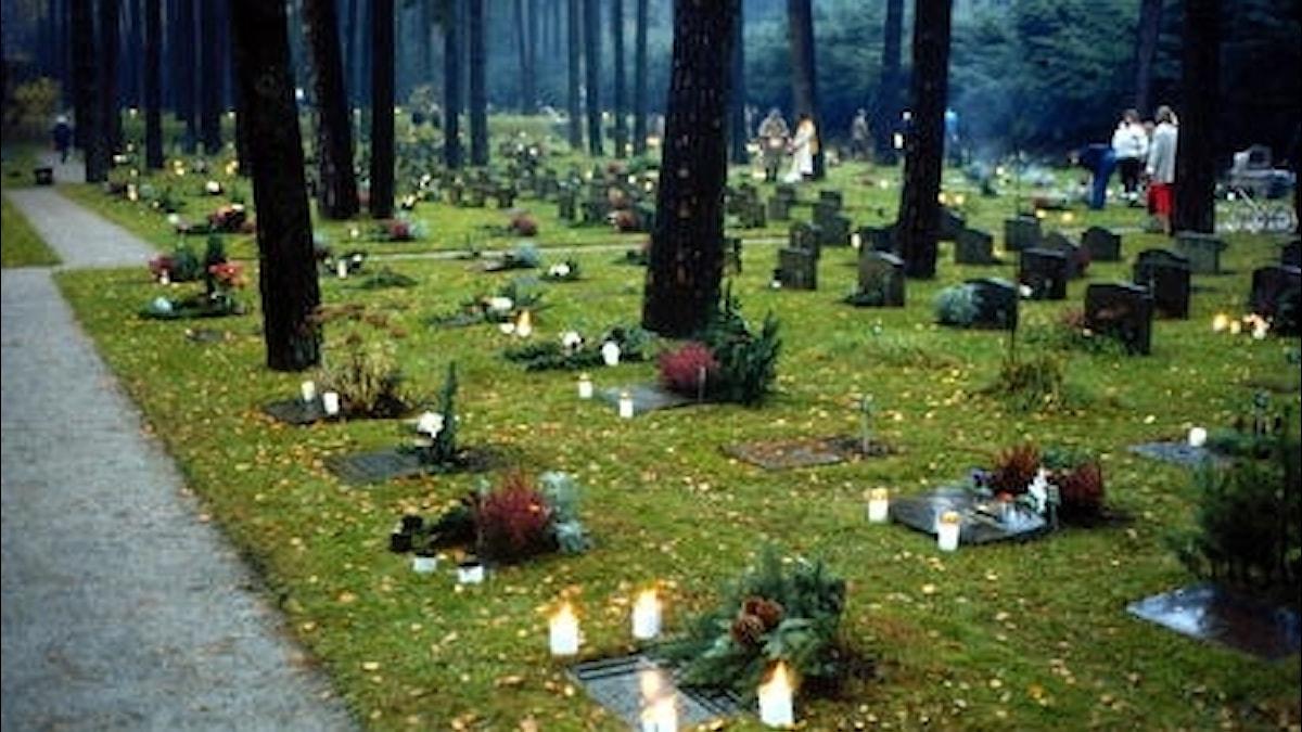 Ljusen tänds på gravarna för alla döda på Alla helgons dag. Foto. Bertil Olofsson.SVT Bild