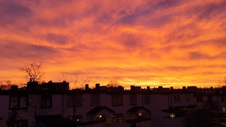 Rosa solnedgång