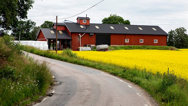 Landsbygd. Foto: Christine Olsson/TT.