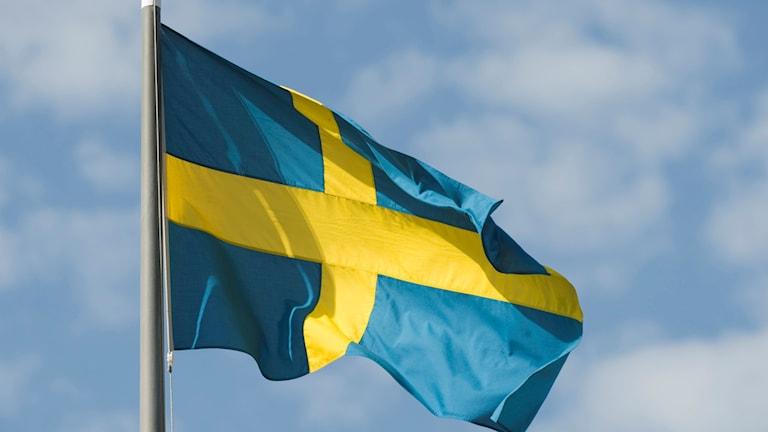 Sveriges flagga. Foto: Henrik Montgomery/TT.