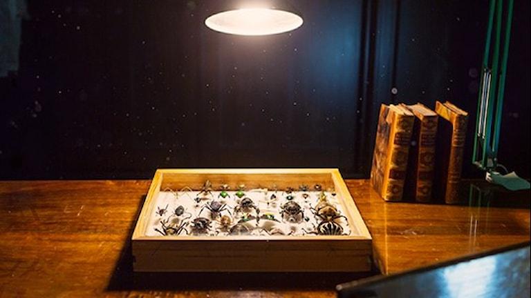 Lampa som lyser över ett bord med insekter.