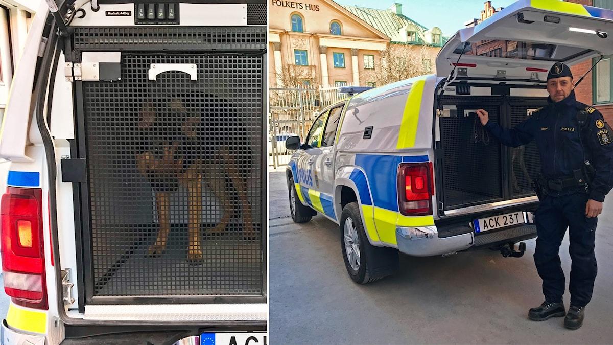 Polishundar i Örebro